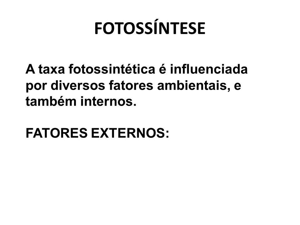 FOTOSSÍNTESE A taxa fotossintética é influenciada por diversos fatores ambientais, e também internos.