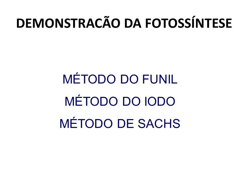 DEMONSTRACÃO DA FOTOSSÍNTESE