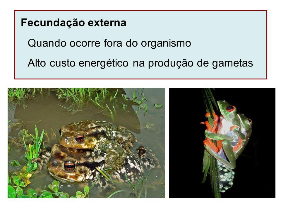 Fecundação externa Quando ocorre fora do organismo Alto custo energético na produção de gametas