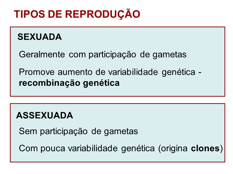 TIPOS DE REPRODUÇÃO SEXUADA Geralmente com participação de gametas