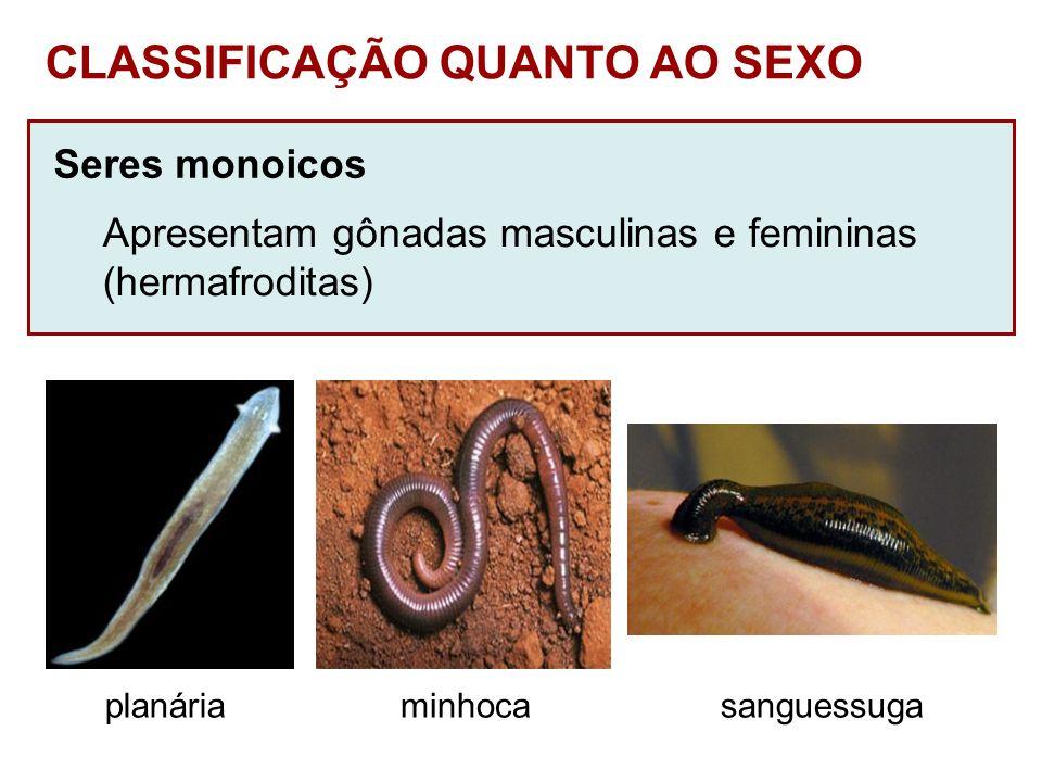 CLASSIFICAÇÃO QUANTO AO SEXO
