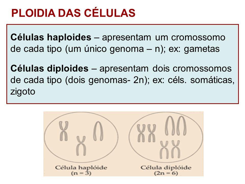 PLOIDIA DAS CÉLULAS Células haploides – apresentam um cromossomo
