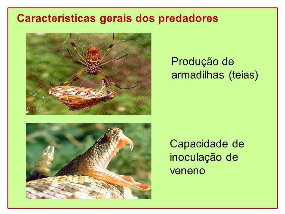 Características gerais dos predadores