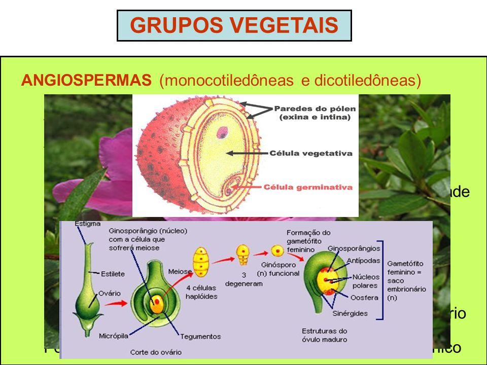 GRUPOS VEGETAIS ANGIOSPERMAS (monocotiledôneas e dicotiledôneas)