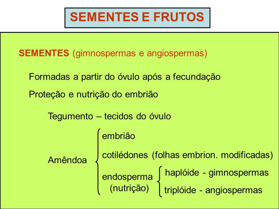 SEMENTES E FRUTOS SEMENTES (gimnospermas e angiospermas)