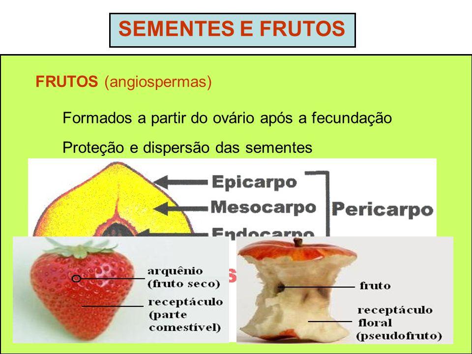 SEMENTES E FRUTOS FRUTOS (angiospermas)