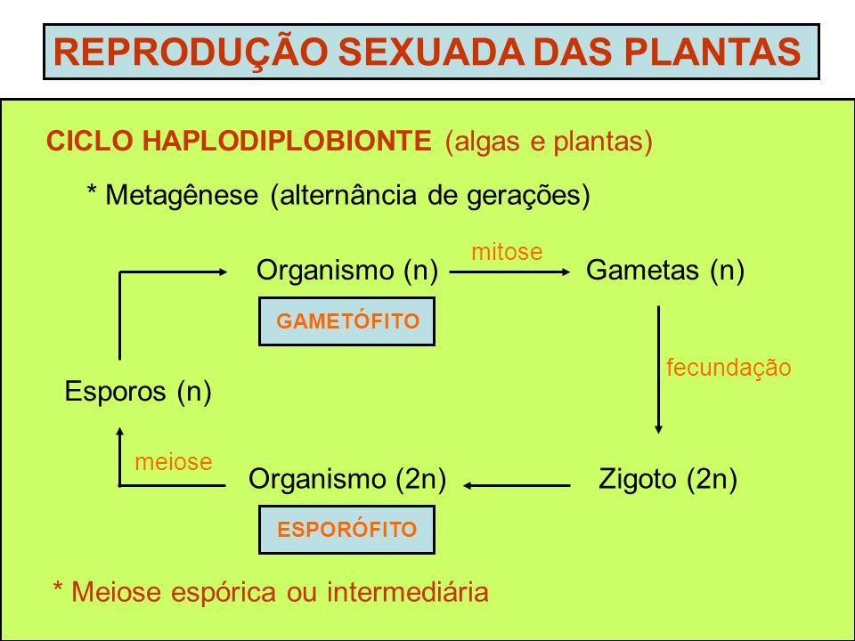 REPRODUÇÃO SEXUADA DAS PLANTAS