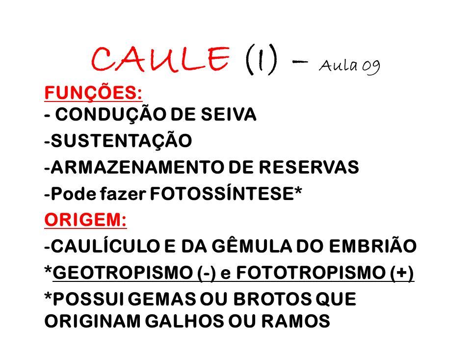 CAULE (I) – Aula 09 FUNÇÕES: - CONDUÇÃO DE SEIVA SUSTENTAÇÃO
