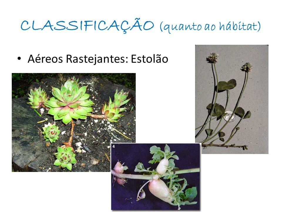 CLASSIFICAÇÃO (quanto ao hábitat)