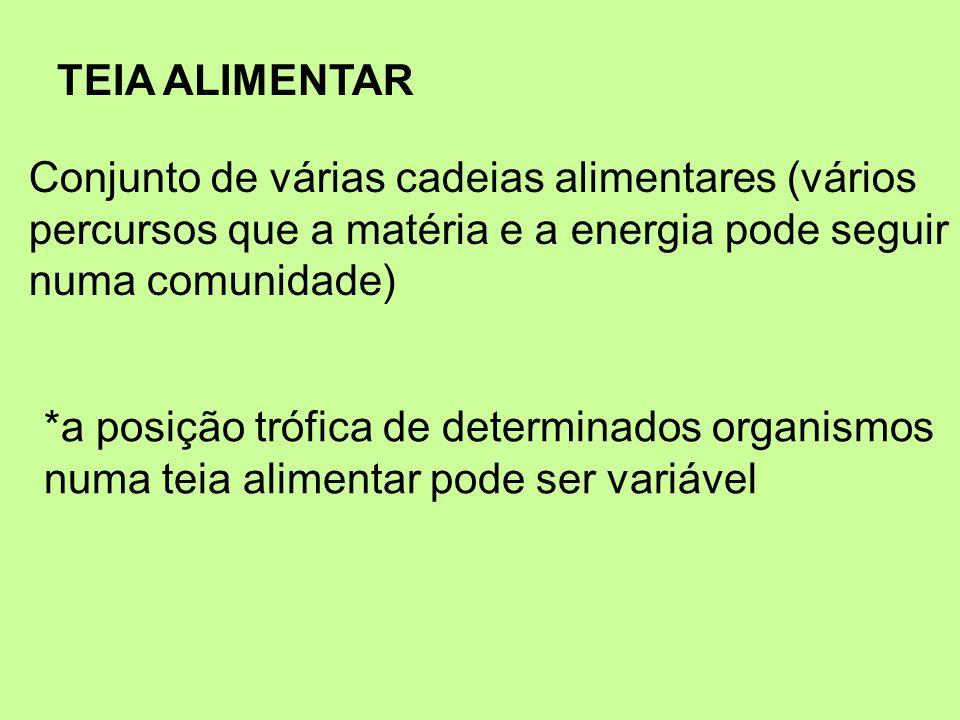 TEIA ALIMENTARConjunto de várias cadeias alimentares (vários. percursos que a matéria e a energia pode seguir.