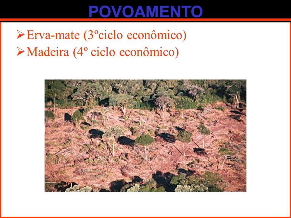 POVOAMENTO Erva-mate (3ºciclo econômico) Madeira (4º ciclo econômico)