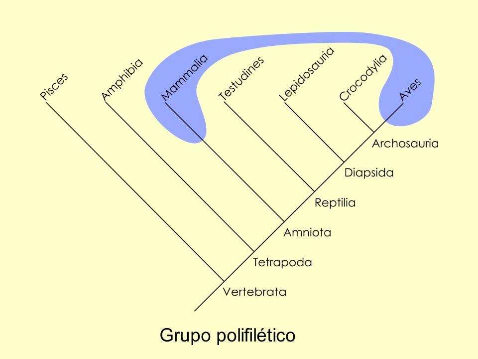 Grupo polifilético