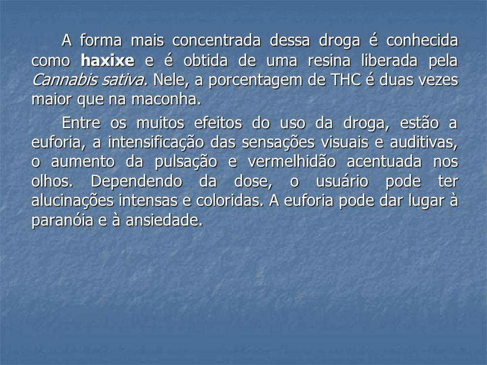 A forma mais concentrada dessa droga é conhecida como haxixe e é obtida de uma resina liberada pela Cannabis sativa. Nele, a porcentagem de THC é duas vezes maior que na maconha.