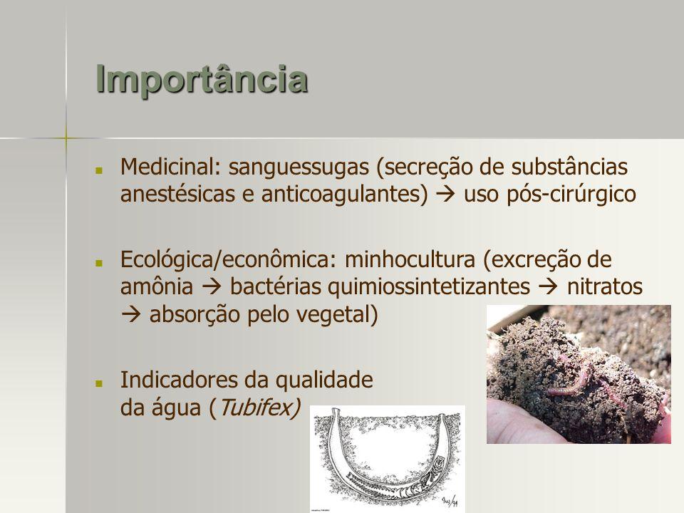 Importância Medicinal: sanguessugas (secreção de substâncias anestésicas e anticoagulantes)  uso pós-cirúrgico.
