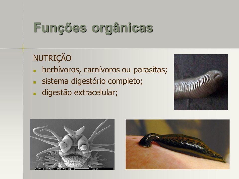 Funções orgânicas NUTRIÇÃO herbívoros, carnívoros ou parasitas;