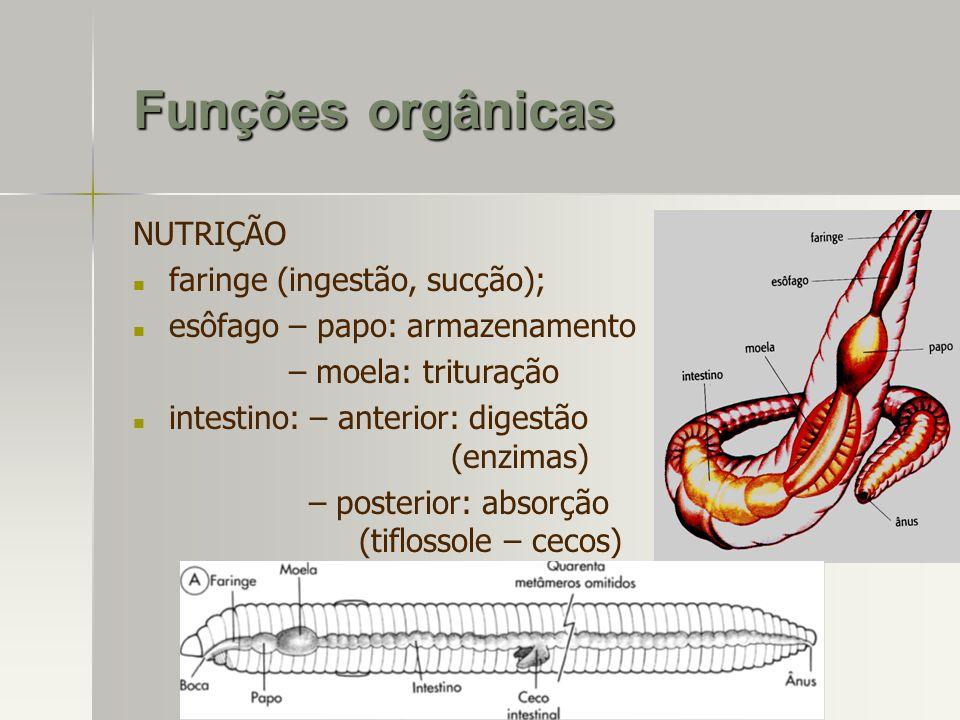 Funções orgânicas NUTRIÇÃO faringe (ingestão, sucção);
