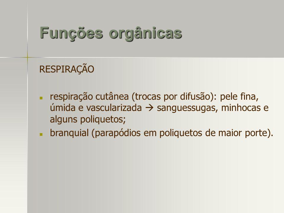 Funções orgânicas RESPIRAÇÃO