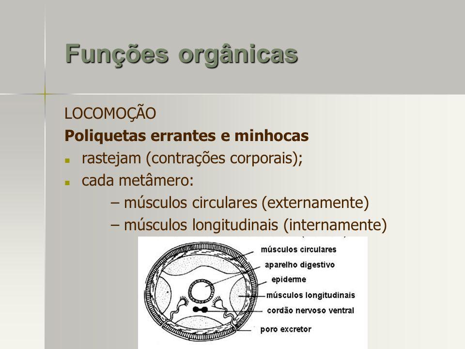 Funções orgânicas LOCOMOÇÃO Poliquetas errantes e minhocas
