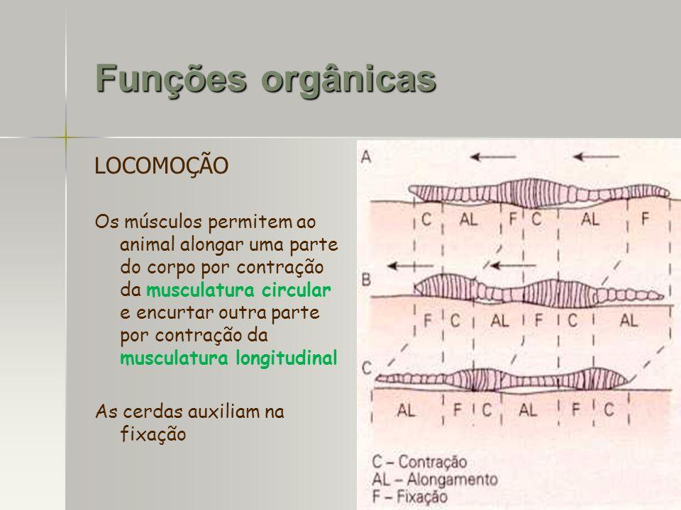 Funções orgânicas LOCOMOÇÃO