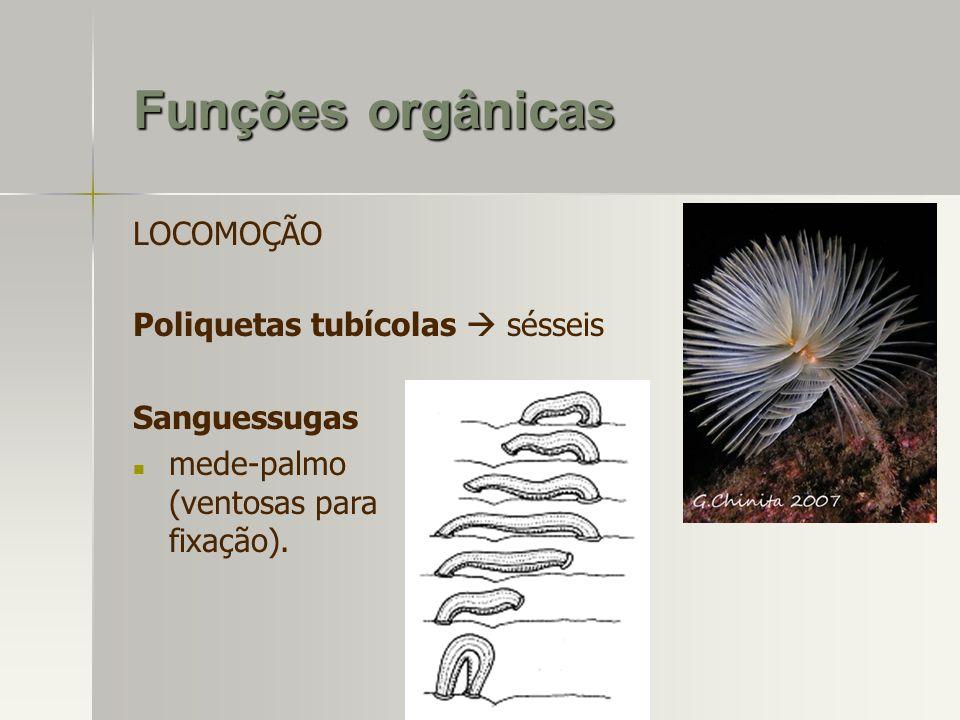 Funções orgânicas LOCOMOÇÃO Poliquetas tubícolas  sésseis