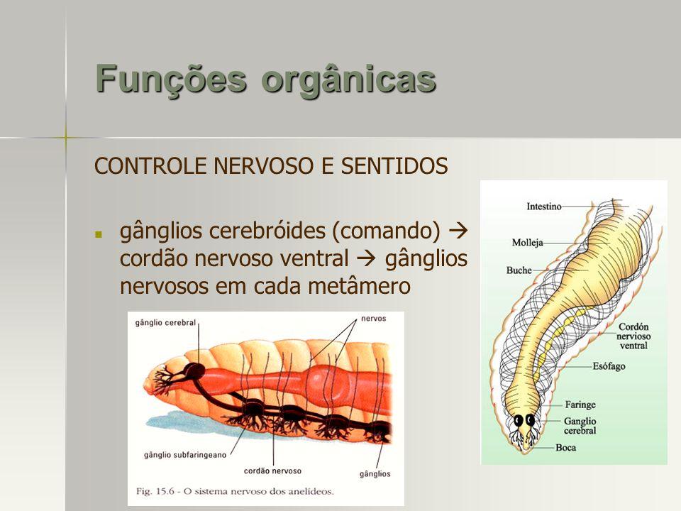 Funções orgânicas CONTROLE NERVOSO E SENTIDOS