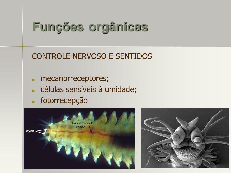 Funções orgânicas CONTROLE NERVOSO E SENTIDOS mecanorreceptores;