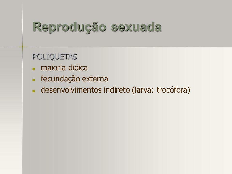 Reprodução sexuada POLIQUETAS maioria dióica fecundação externa