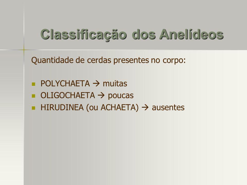 Classificação dos Anelídeos