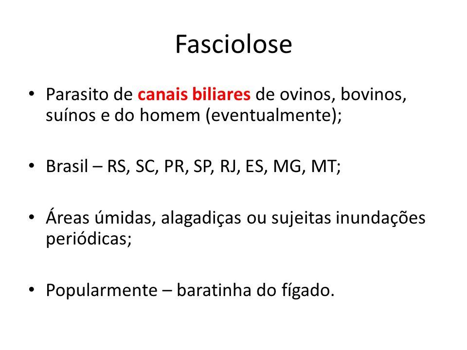 Fasciolose Parasito de canais biliares de ovinos, bovinos, suínos e do homem (eventualmente); Brasil – RS, SC, PR, SP, RJ, ES, MG, MT;