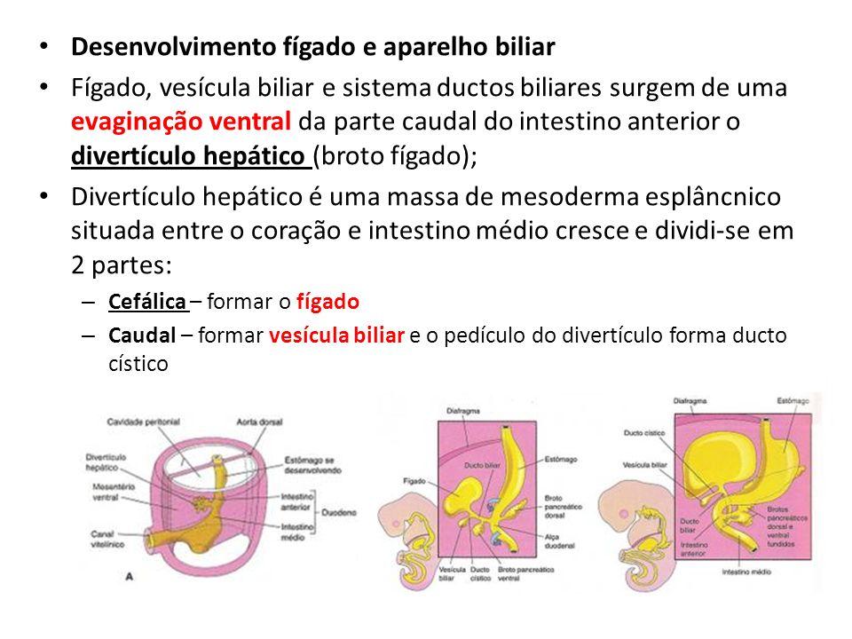 Desenvolvimento fígado e aparelho biliar