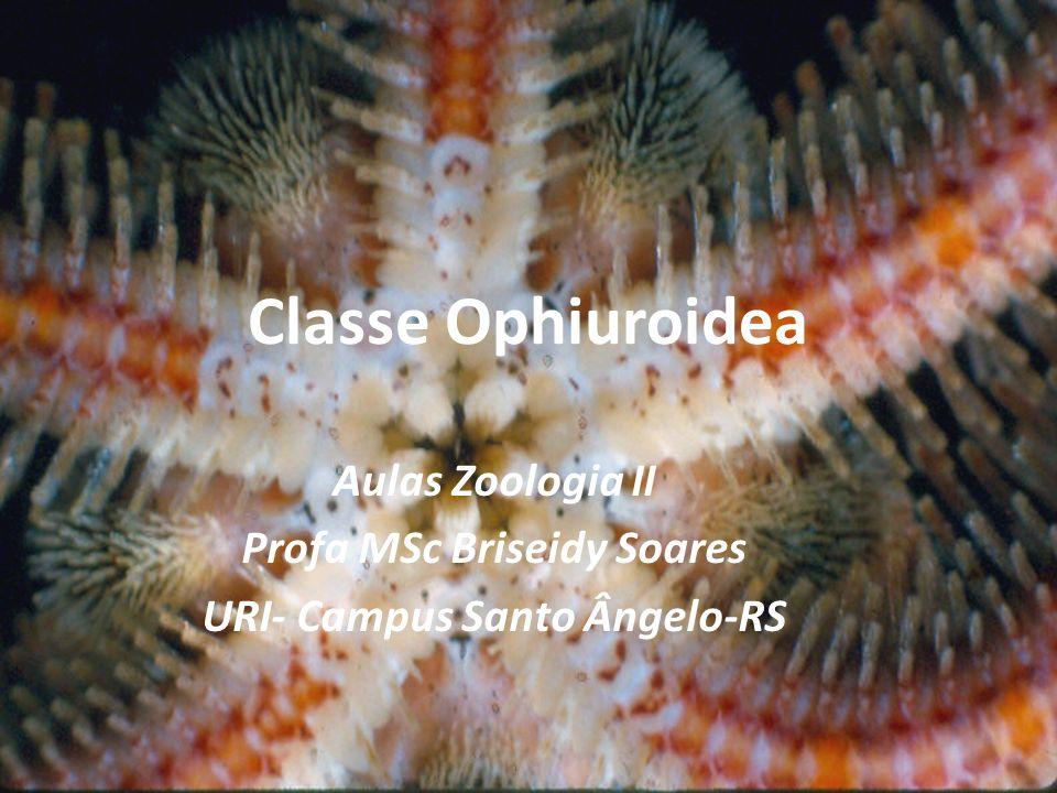 Profa MSc Briseidy Soares URI- Campus Santo Ângelo-RS