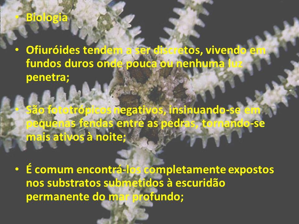 BiologiaOfiuróides tendem a ser discretos, vivendo em fundos duros onde pouca ou nenhuma luz penetra;