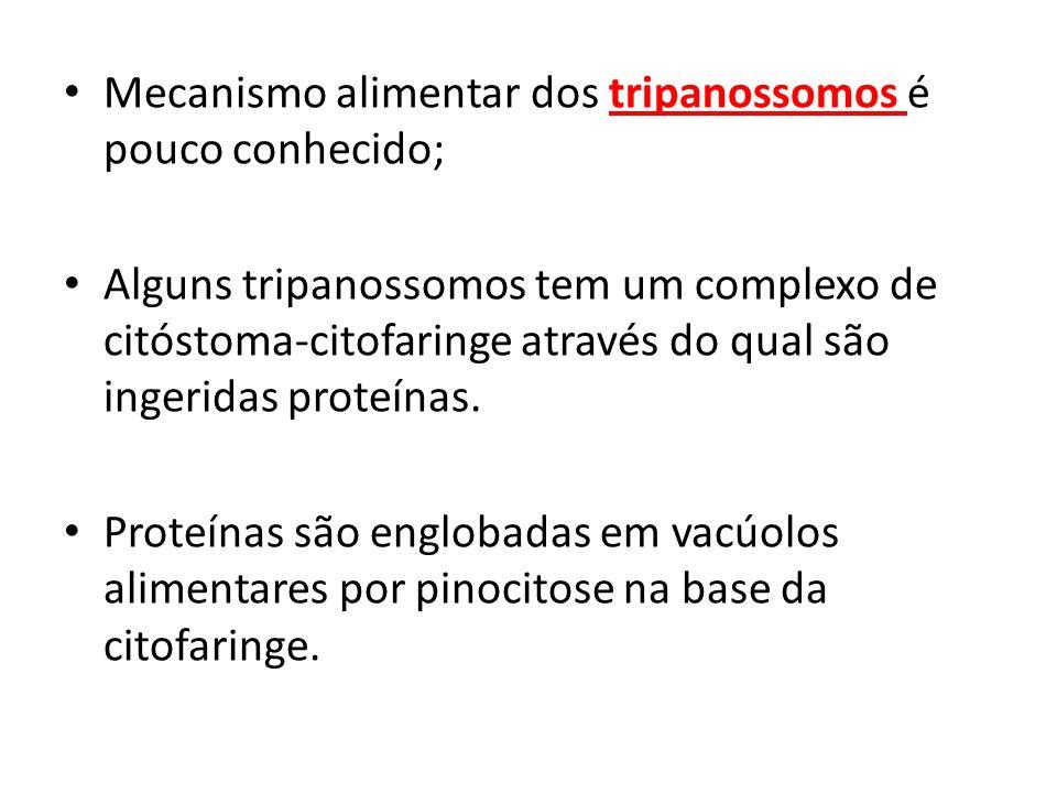 Mecanismo alimentar dos tripanossomos é pouco conhecido;