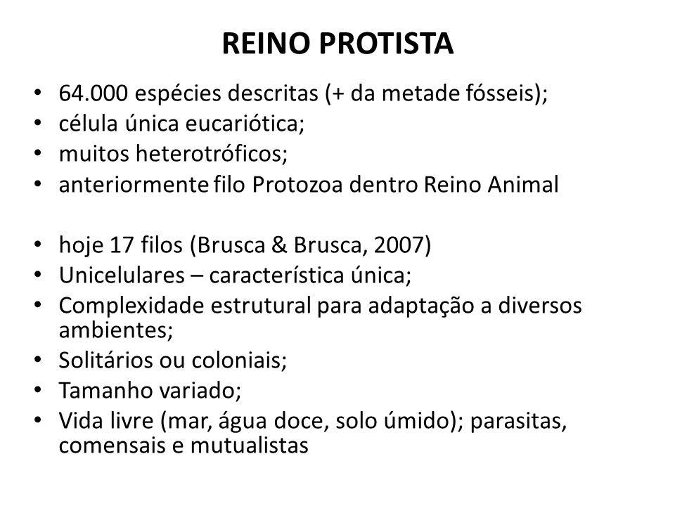 REINO PROTISTA 64.000 espécies descritas (+ da metade fósseis);