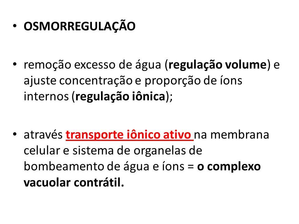 OSMORREGULAÇÃO remoção excesso de água (regulação volume) e ajuste concentração e proporção de íons internos (regulação iônica);