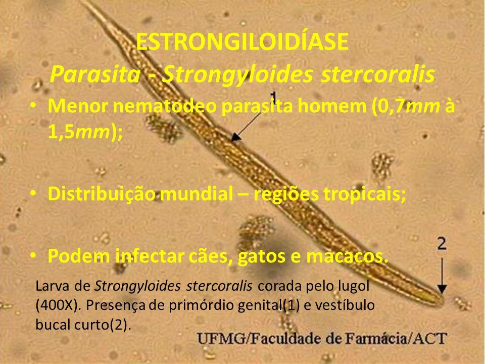 ESTRONGILOIDÍASE Parasita - Strongyloides stercoralis