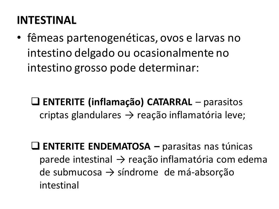 INTESTINALfêmeas partenogenéticas, ovos e larvas no intestino delgado ou ocasionalmente no intestino grosso pode determinar: