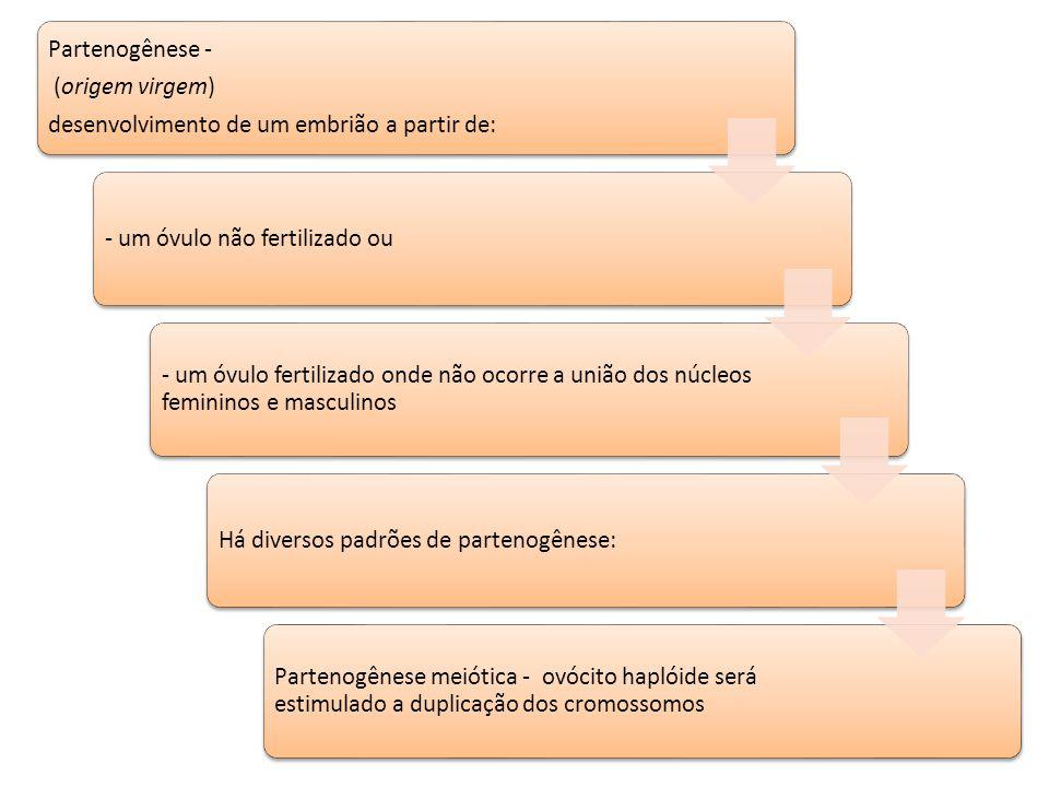 Partenogênese - (origem virgem) desenvolvimento de um embrião a partir de: - um óvulo não fertilizado ou.