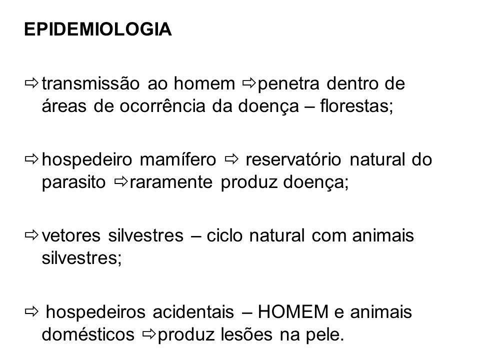 EPIDEMIOLOGIA transmissão ao homem penetra dentro de áreas de ocorrência da doença – florestas;