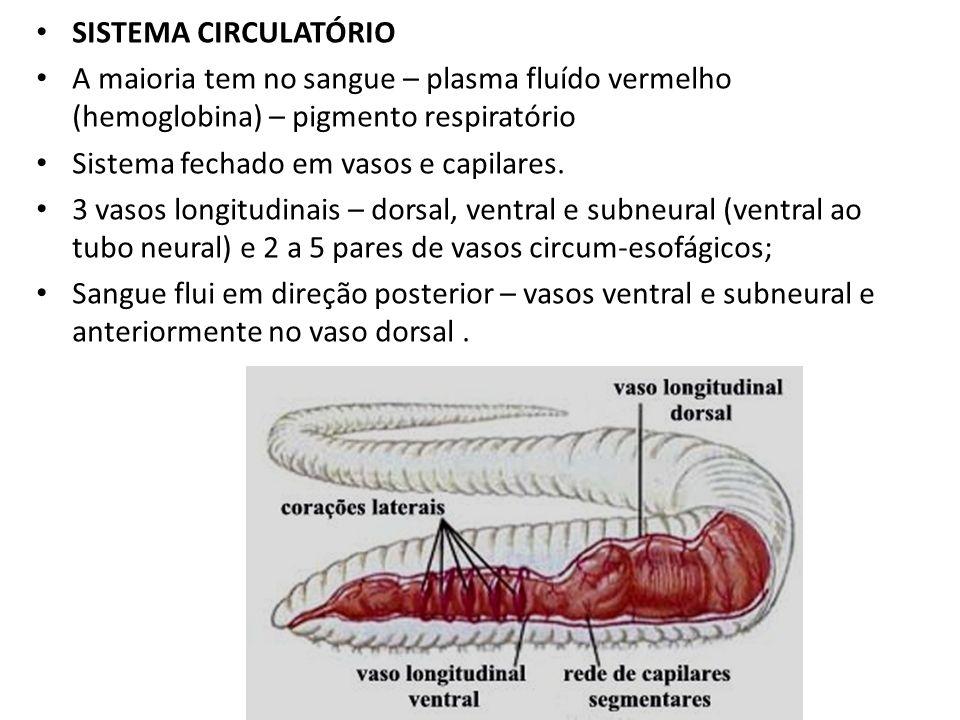 SISTEMA CIRCULATÓRIO A maioria tem no sangue – plasma fluído vermelho (hemoglobina) – pigmento respiratório.