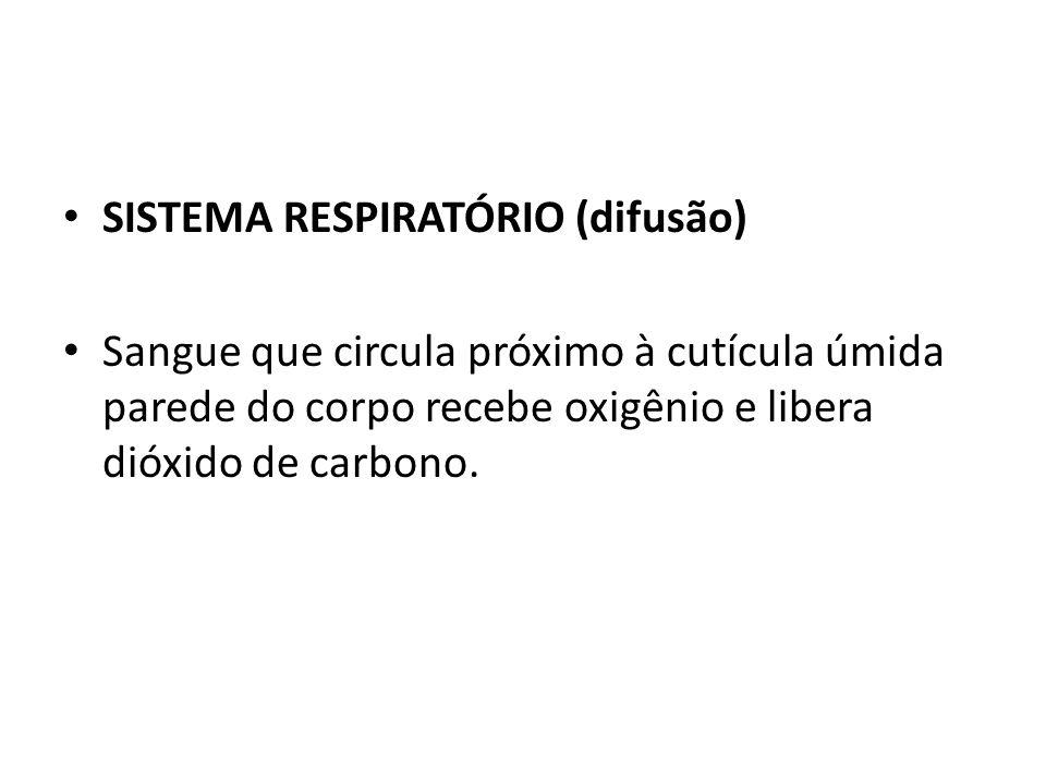 SISTEMA RESPIRATÓRIO (difusão)