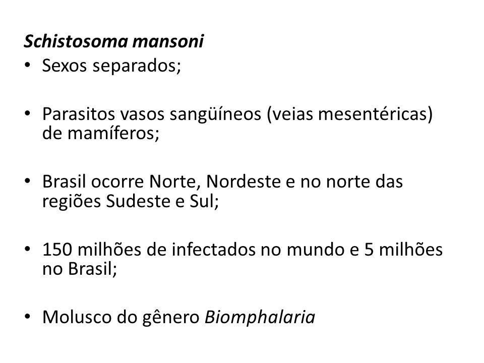 Schistosoma mansoni Sexos separados; Parasitos vasos sangüíneos (veias mesentéricas) de mamíferos;
