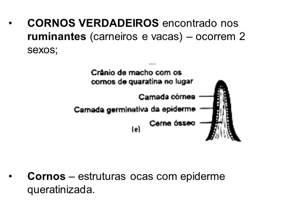 CORNOS VERDADEIROS encontrado nos ruminantes (carneiros e vacas) – ocorrem 2 sexos;