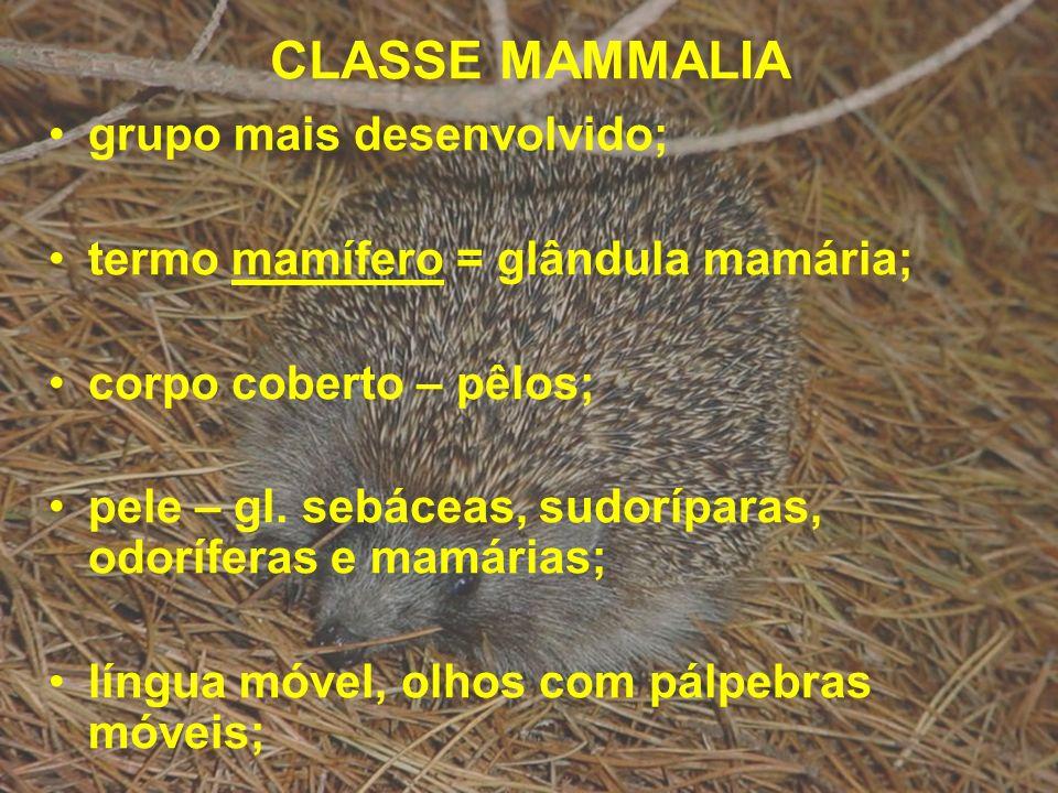 CLASSE MAMMALIA grupo mais desenvolvido;