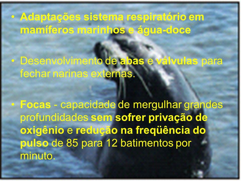 Adaptações sistema respiratório em mamíferos marinhos e água-doce