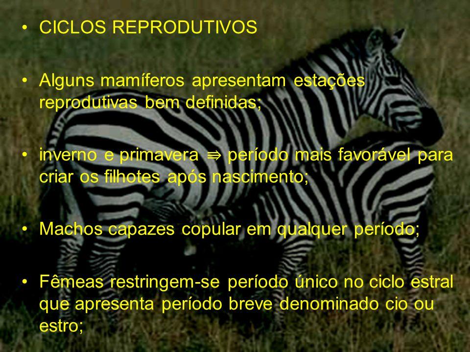 CICLOS REPRODUTIVOS Alguns mamíferos apresentam estações reprodutivas bem definidas;