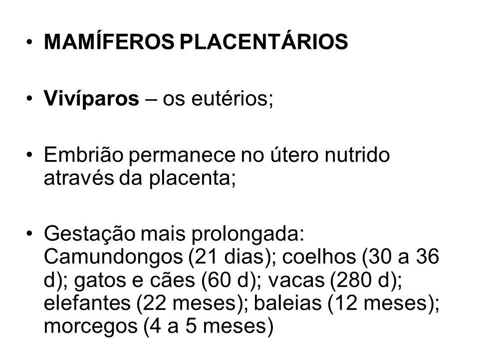 MAMÍFEROS PLACENTÁRIOS