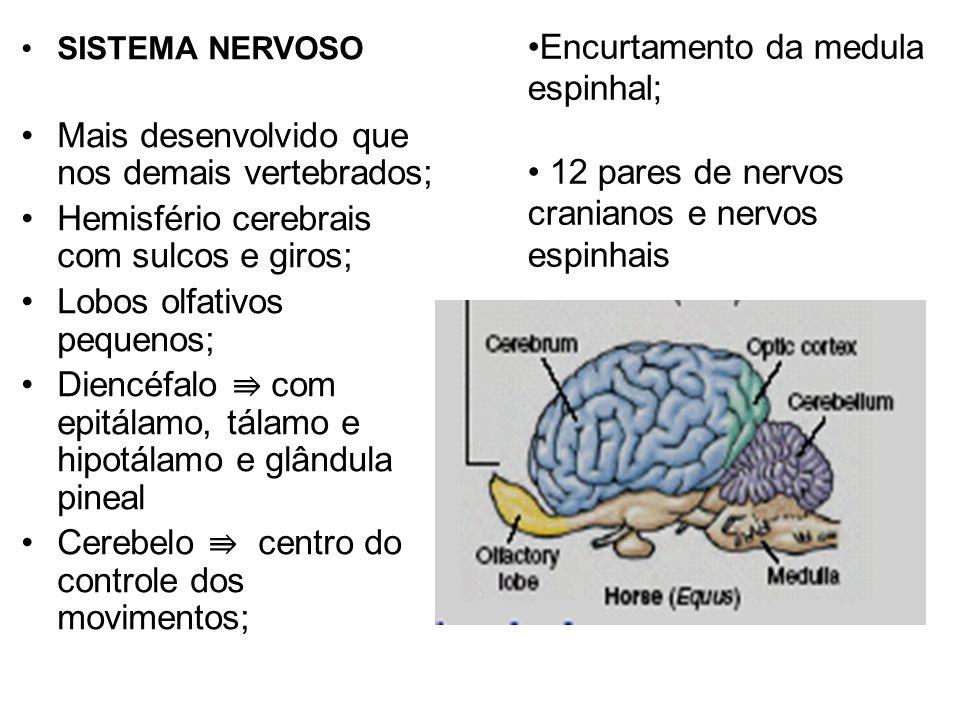 Encurtamento da medula espinhal;