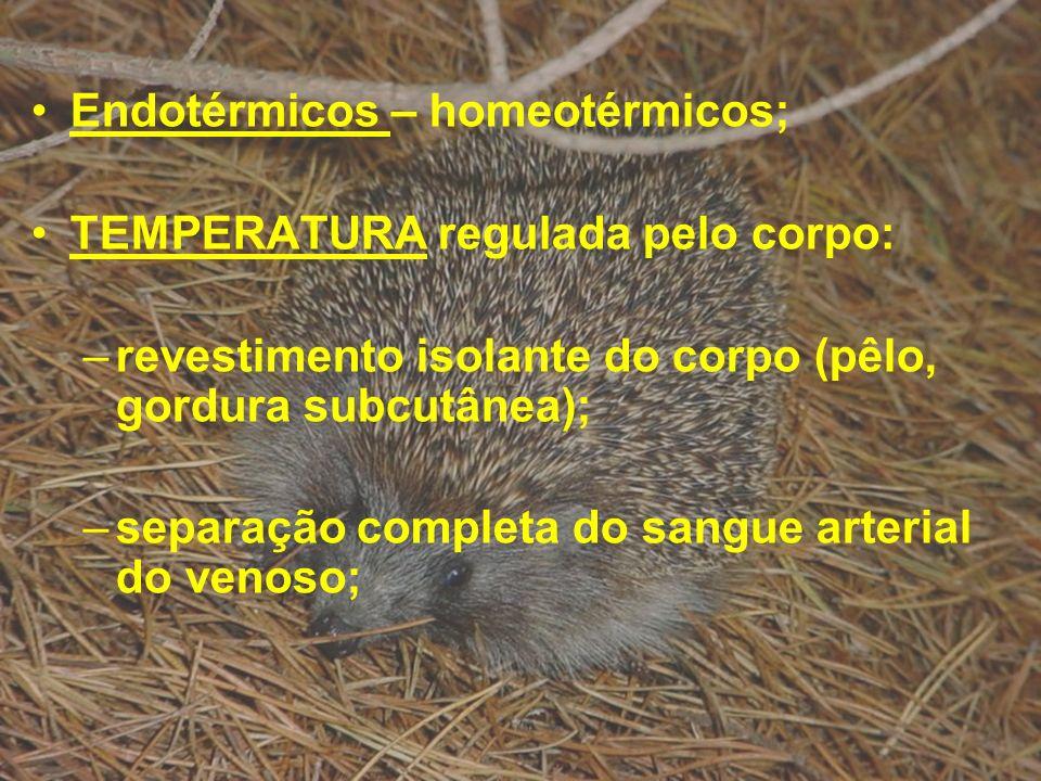 Endotérmicos – homeotérmicos;