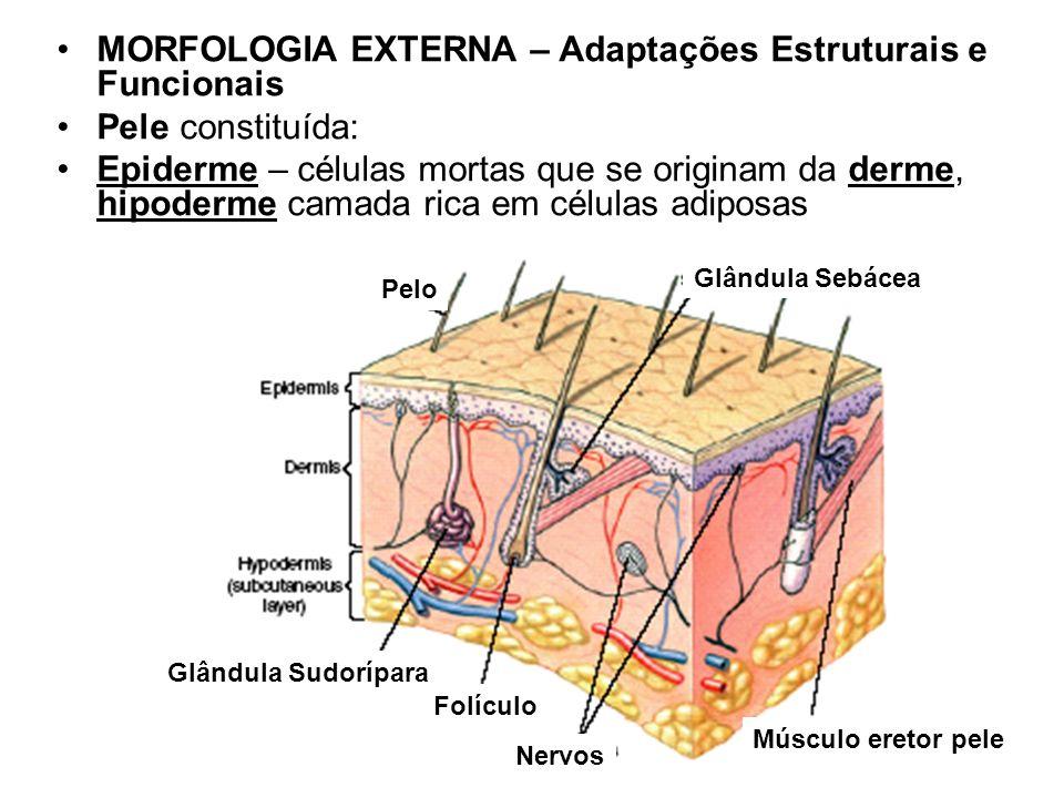MORFOLOGIA EXTERNA – Adaptações Estruturais e Funcionais